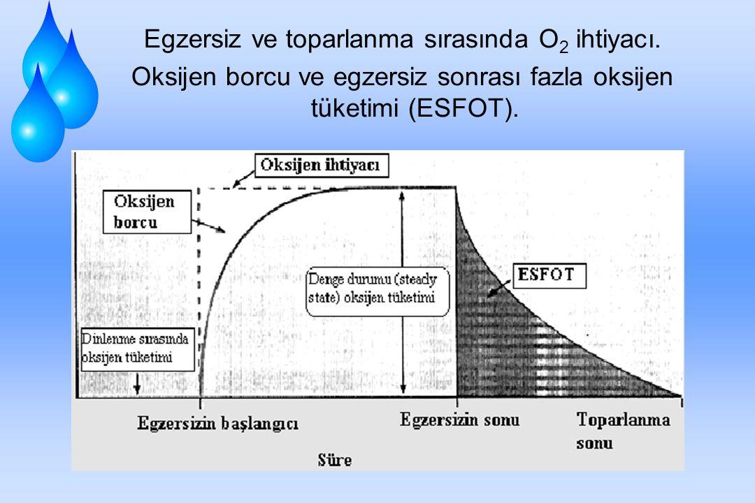 EGZERSİZ SONRASI TOPARLANMA Egzersizden sonraki toparlanma periyodu sırasındaki enerji ihtiyacı, egzersiz sonlandığı için egzersiz sırasındaki enerji