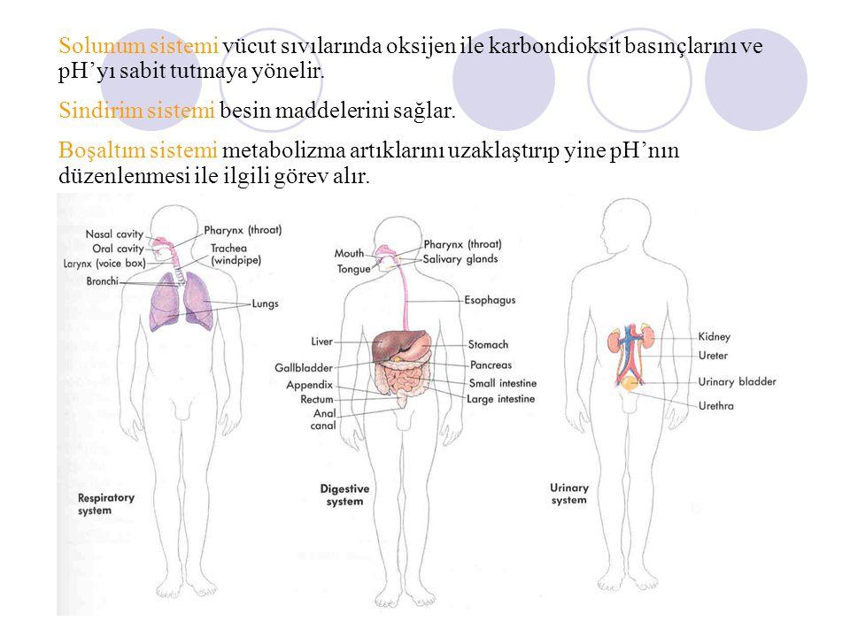 İnsan Organizmasındaki Sistemler Deri Kabuk Sistemi İskelet Sistemi Kas Sistemi Dolaşım Sistemi Lenfatik sistem Sinir Sistemi Hormonal Sistem Solunum Sistemi Sindirim sistemi Boşaltım Sistemi Üreme Sistemi