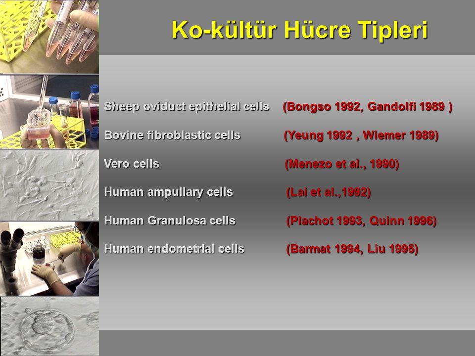 Sheep oviduct epithelial cells (Bongso 1992, Gandolfi 1989 ) Bovine fibroblastic cells (Yeung 1992, Wiemer 1989) Vero cells (Menezo et al., 1990) Human ampullary cells (Lai et al.,1992) Human Granulosa cells (Plachot 1993, Quinn 1996) Human endometrial cells (Barmat 1994, Liu 1995) Ko-kültür Hücre Tipleri