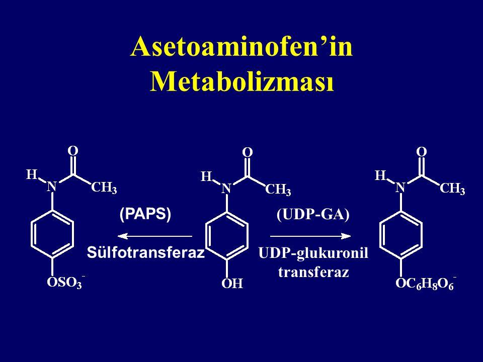 Asetoaminofen'in Metabolizması (PAPS) Sülfotransferaz (UDP-GA) UDP-glukuronil transferaz