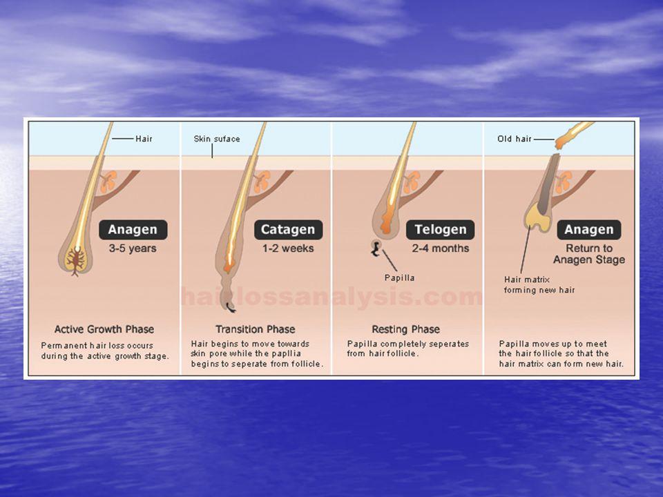TEDAVİ Sebebin giderilmesi Topikal veya intralezyonel steroidler Sedasyon Minoksidil Antralin