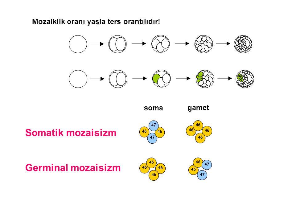 Germinal mozaisizm Somatik mozaisizm soma gamet Mozaiklik oranı yaşla ters orantılıdır!