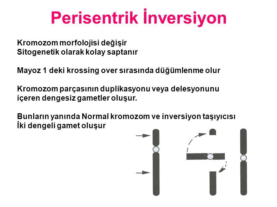 Kromozom morfolojisi değişir Sitogenetik olarak kolay saptanır Mayoz 1 deki krossing over sırasında düğümlenme olur Kromozom parçasının duplikasyonu v