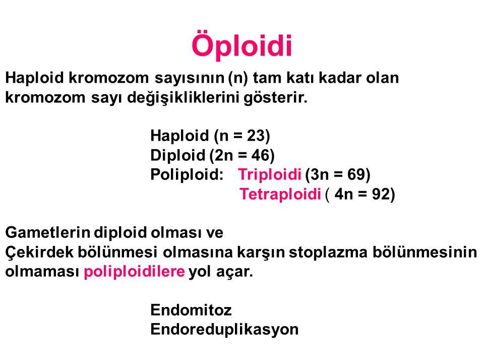 Haploid kromozom sayısının (n) tam katı kadar olan kromozom sayı değişikliklerini gösterir. Haploid (n = 23) Diploid (2n = 46) Poliploid: Triploidi (3