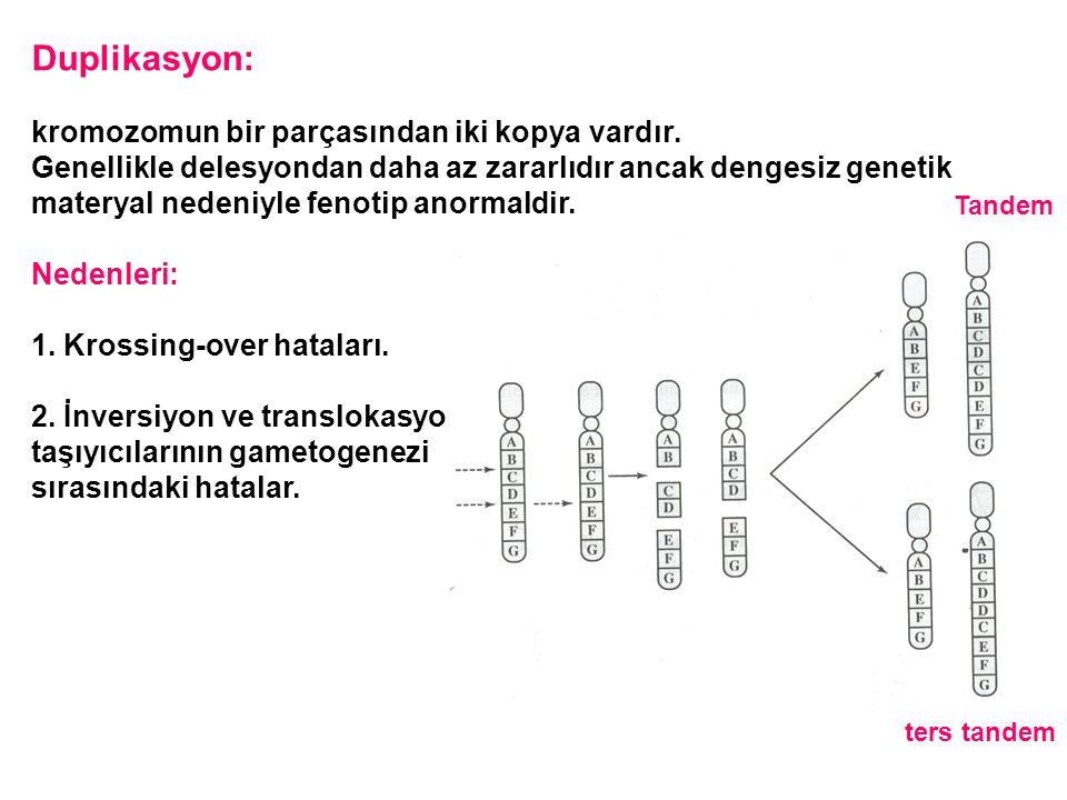 Duplikasyon: kromozomun bir parçasından iki kopya vardır. Genellikle delesyondan daha az zararlıdır ancak dengesiz genetik materyal nedeniyle fenotip