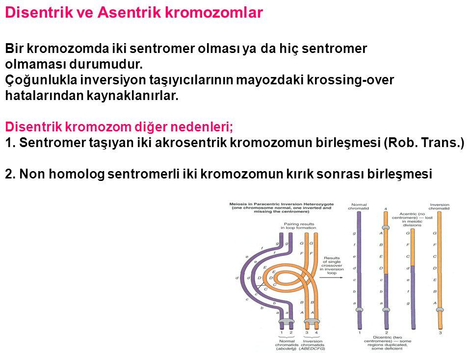 Disentrik ve Asentrik kromozomlar Bir kromozomda iki sentromer olması ya da hiç sentromer olmaması durumudur. Çoğunlukla inversiyon taşıyıcılarının ma