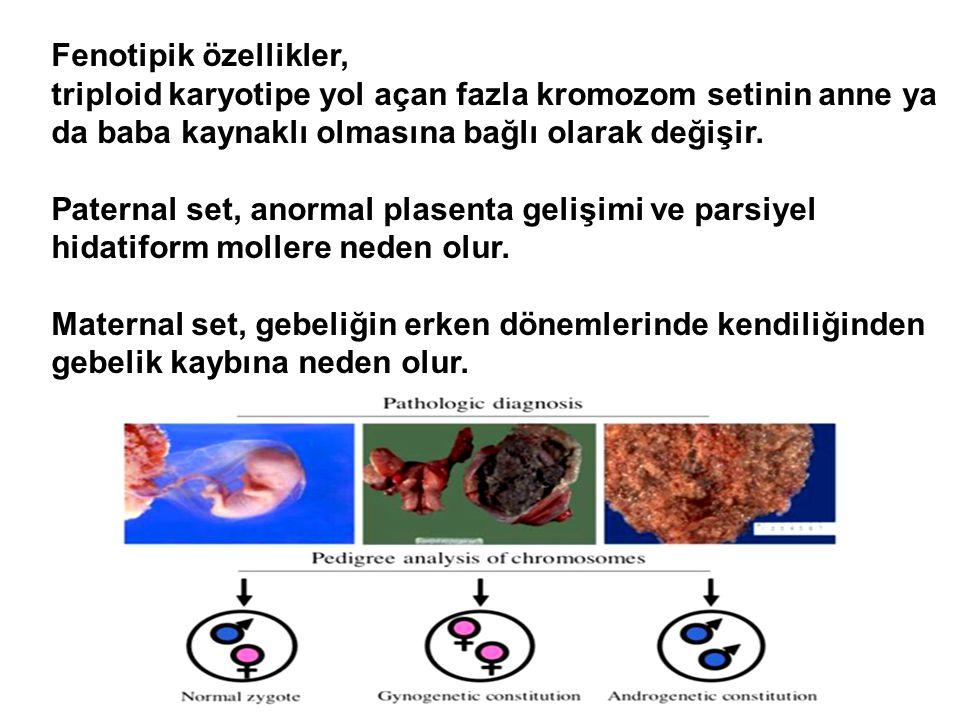 Fenotipik özellikler, triploid karyotipe yol açan fazla kromozom setinin anne ya da baba kaynaklı olmasına bağlı olarak değişir. Paternal set, anormal