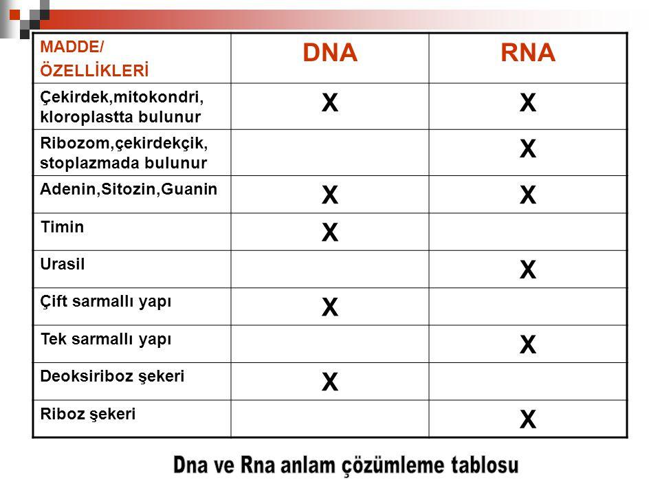 MADDE/ ÖZELLİKLERİ DNARNA Çekirdek,mitokondri, kloroplastta bulunur XX Ribozom,çekirdekçik, stoplazmada bulunur X Adenin,Sitozin,Guanin XX Timin X Ura