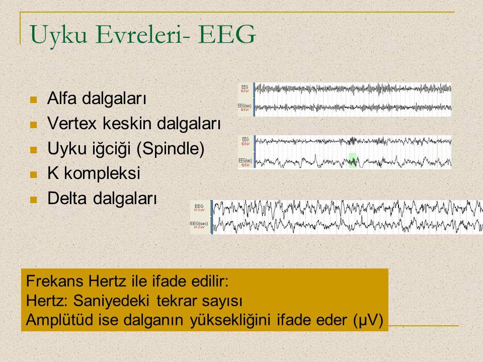 Uyku Evreleri- EEG Alfa dalgaları Vertex keskin dalgaları Uyku iğciği (Spindle) K kompleksi Delta dalgaları Frekans Hertz ile ifade edilir: Hertz: San