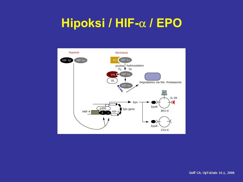 EPO Reseptör aktivasyonu Dimerizasyon Transfosforilasyon Fosforilasyon Protein (Scr homology 2) bağlanma noktaları oluşumu Lacombe C, Mayeux P.