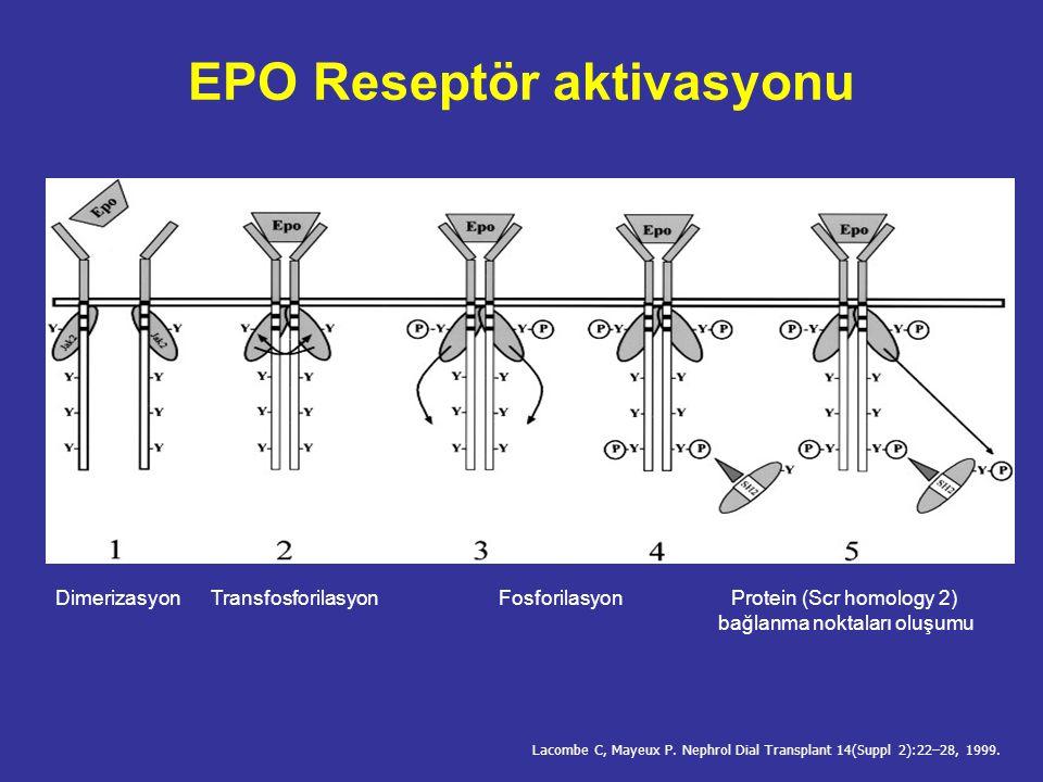 EPO-biyolojik etki Singh AK. The Newer Erythropoietins. ASN Renal Week - November 2006