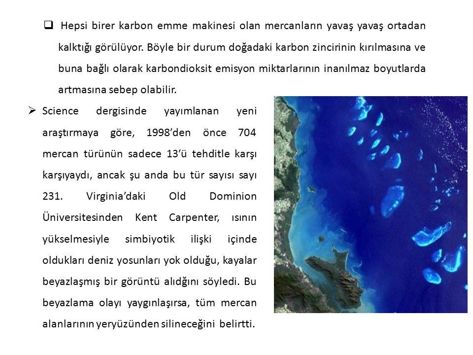  Hepsi birer karbon emme makinesi olan mercanların yavaş yavaş ortadan kalktığı görülüyor. Böyle bir durum doğadaki karbon zincirinin kırılmasına ve