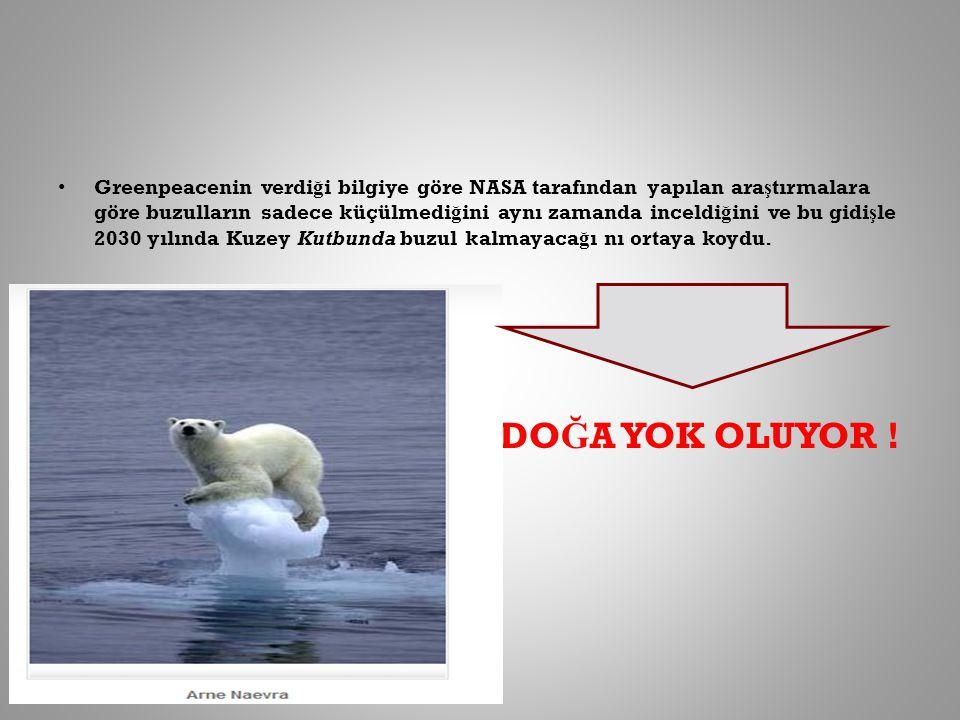 Greenpeacenin verdi ğ i bilgiye göre NASA tarafından yapılan ara ş tırmalara göre buzulların sadece küçülmedi ğ ini aynı zamanda inceldi ğ ini ve bu g