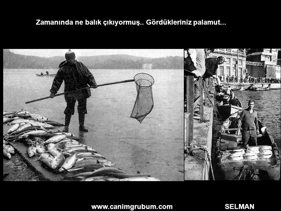 www.canimgrubum.com SELMAN Zamanında ne balık çıkıyormuş.. Gördükleriniz palamut...