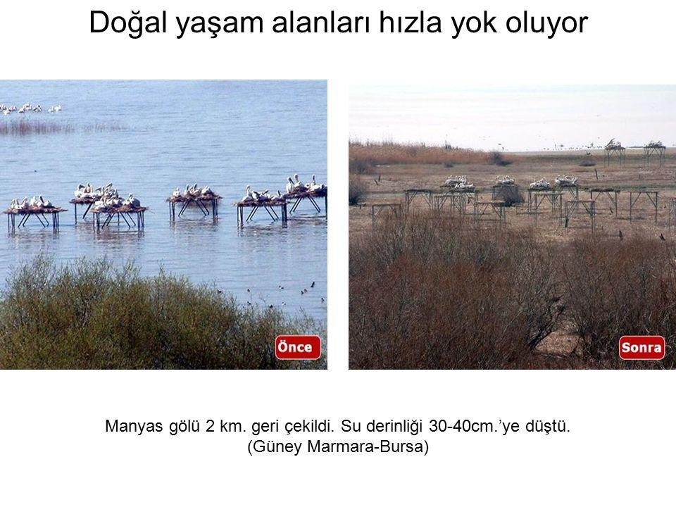 Manyas gölü 2 km. geri çekildi. Su derinliği 30-40cm.'ye düştü.