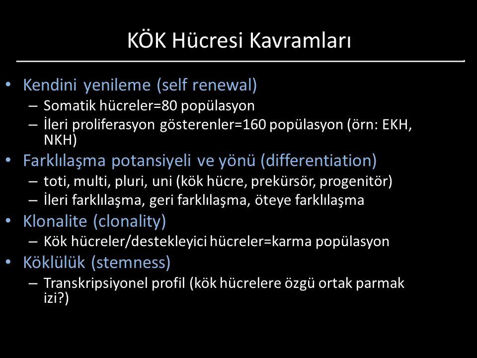 KÖK Hücresi Kavramları Kendini yenileme (self renewal) – Somatik hücreler=80 popülasyon – İleri proliferasyon gösterenler=160 popülasyon (örn: EKH, NK