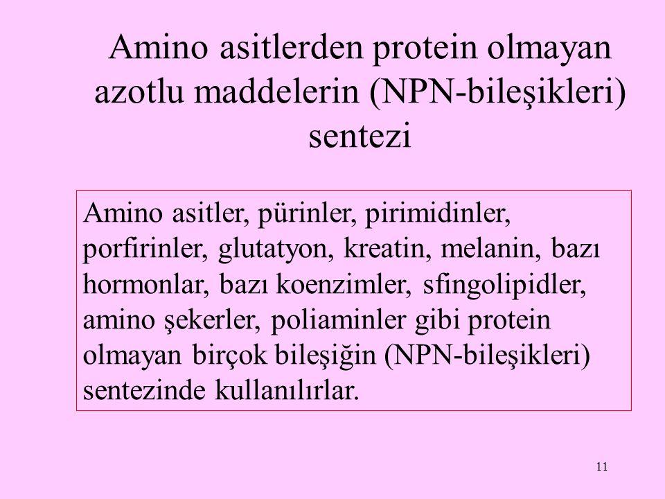 11 Amino asitlerden protein olmayan azotlu maddelerin (NPN-bileşikleri) sentezi Amino asitler, pürinler, pirimidinler, porfirinler, glutatyon, kreatin