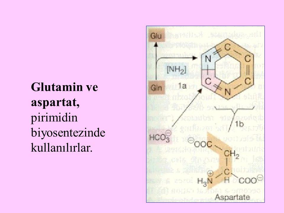 13 Glutamin ve aspartat, pirimidin biyosentezinde kullanılırlar.