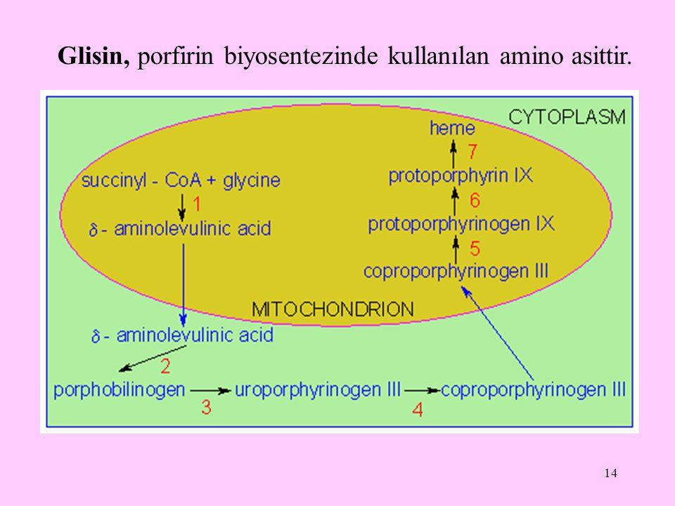 14 Glisin, porfirin biyosentezinde kullanılan amino asittir.