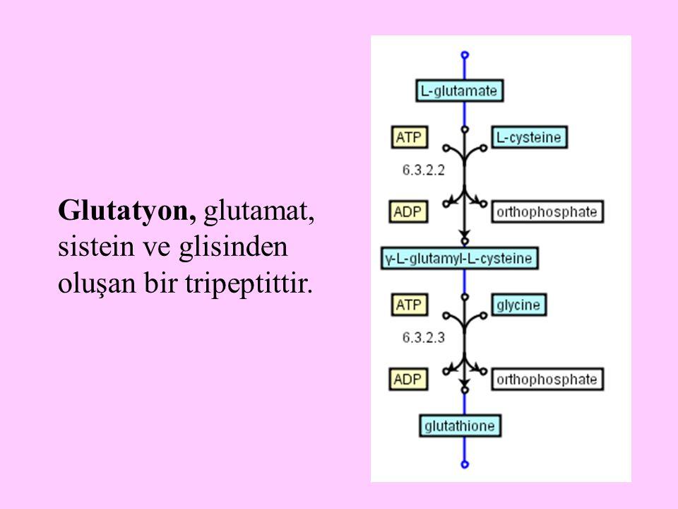 15 Glutatyon, glutamat, sistein ve glisinden oluşan bir tripeptittir.