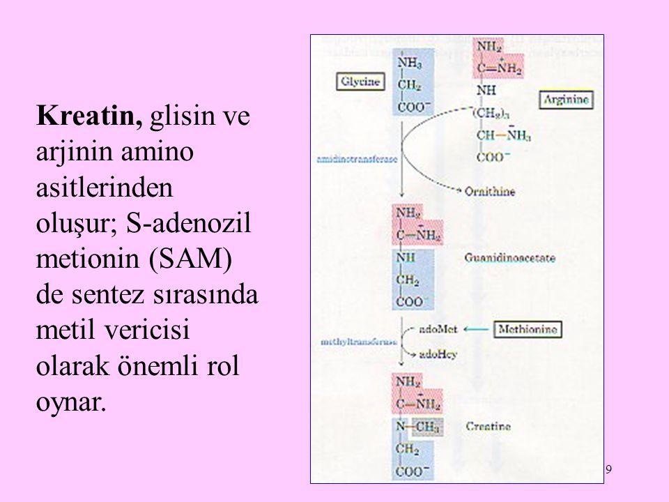 19 Kreatin, glisin ve arjinin amino asitlerinden oluşur; S-adenozil metionin (SAM) de sentez sırasında metil vericisi olarak önemli rol oynar.
