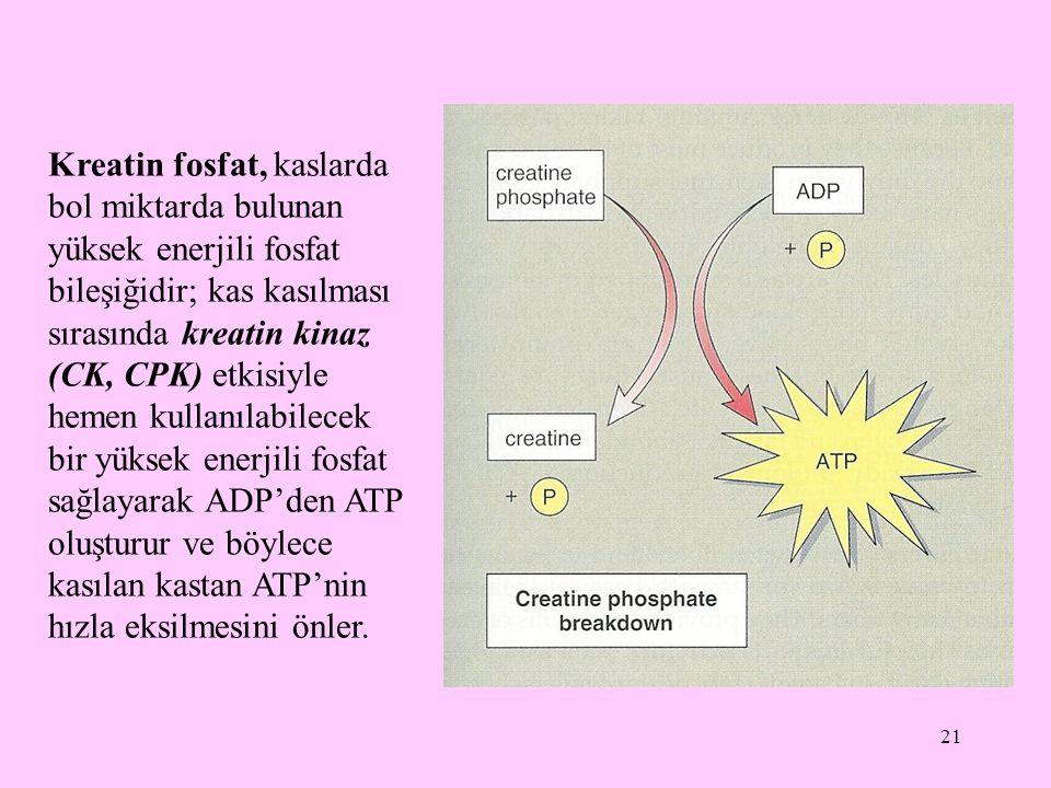 21 Kreatin fosfat, kaslarda bol miktarda bulunan yüksek enerjili fosfat bileşiğidir; kas kasılması sırasında kreatin kinaz (CK, CPK) etkisiyle hemen k