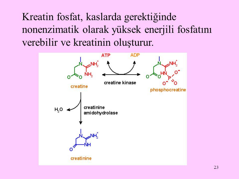 23 Kreatin fosfat, kaslarda gerektiğinde nonenzimatik olarak yüksek enerjili fosfatını verebilir ve kreatinin oluşturur.