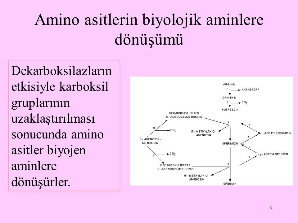 5 Amino asitlerin biyolojik aminlere dönüşümü Dekarboksilazların etkisiyle karboksil gruplarının uzaklaştırılması sonucunda amino asitler biyojen amin