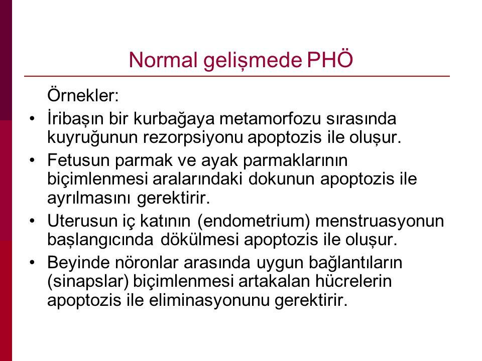 Normal gelişmede PHÖ Örnekler: İribaşın bir kurbağaya metamorfozu sırasında kuyruğunun rezorpsiyonu apoptozis ile oluşur.
