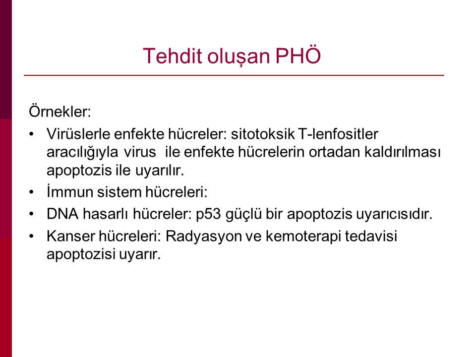 Tehdit oluşan PHÖ Örnekler: Virüslerle enfekte hücreler: sitotoksik T-lenfositler aracılığıyla virus ile enfekte hücrelerin ortadan kaldırılması apoptozis ile uyarılır.