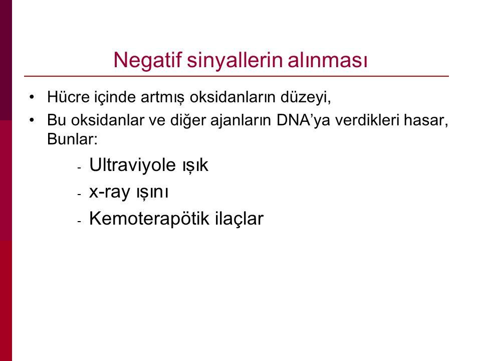 Negatif sinyallerin alınması Hücre içinde artmış oksidanların düzeyi, Bu oksidanlar ve diğer ajanların DNA'ya verdikleri hasar, Bunlar: - Ultraviyole ışık - x-ray ışını - Kemoterapötik ilaçlar