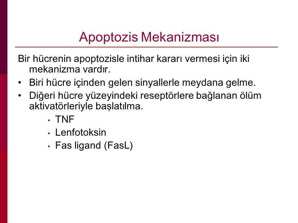 Apoptozis Mekanizması Bir hücrenin apoptozisle intihar kararı vermesi için iki mekanizma vardır.