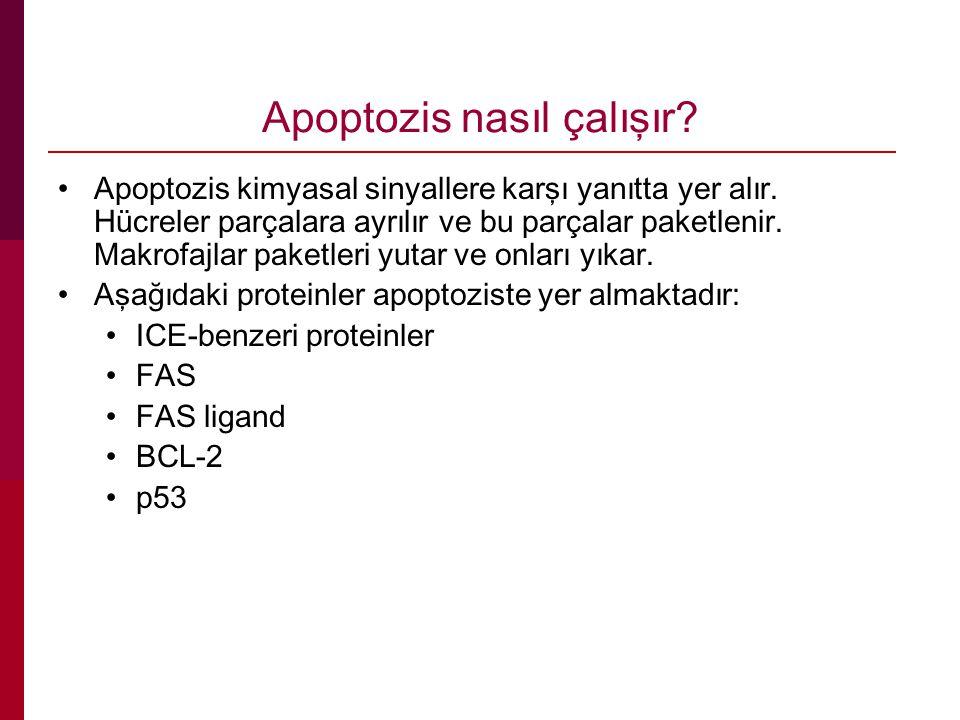 Apoptozis nasıl çalışır.Apoptozis kimyasal sinyallere karşı yanıtta yer alır.