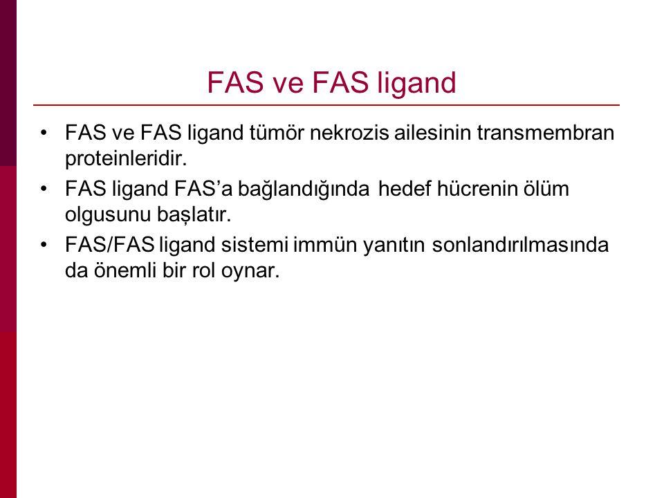 FAS ve FAS ligand FAS ve FAS ligand tümör nekrozis ailesinin transmembran proteinleridir. FAS ligand FAS'a bağlandığında hedef hücrenin ölüm olgusunu