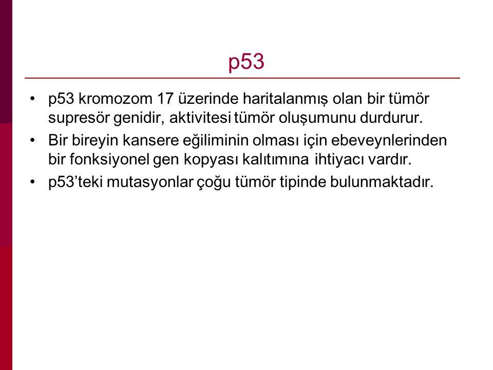 p53 p53 kromozom 17 üzerinde haritalanmış olan bir tümör supresör genidir, aktivitesi tümör oluşumunu durdurur. Bir bireyin kansere eğiliminin olması