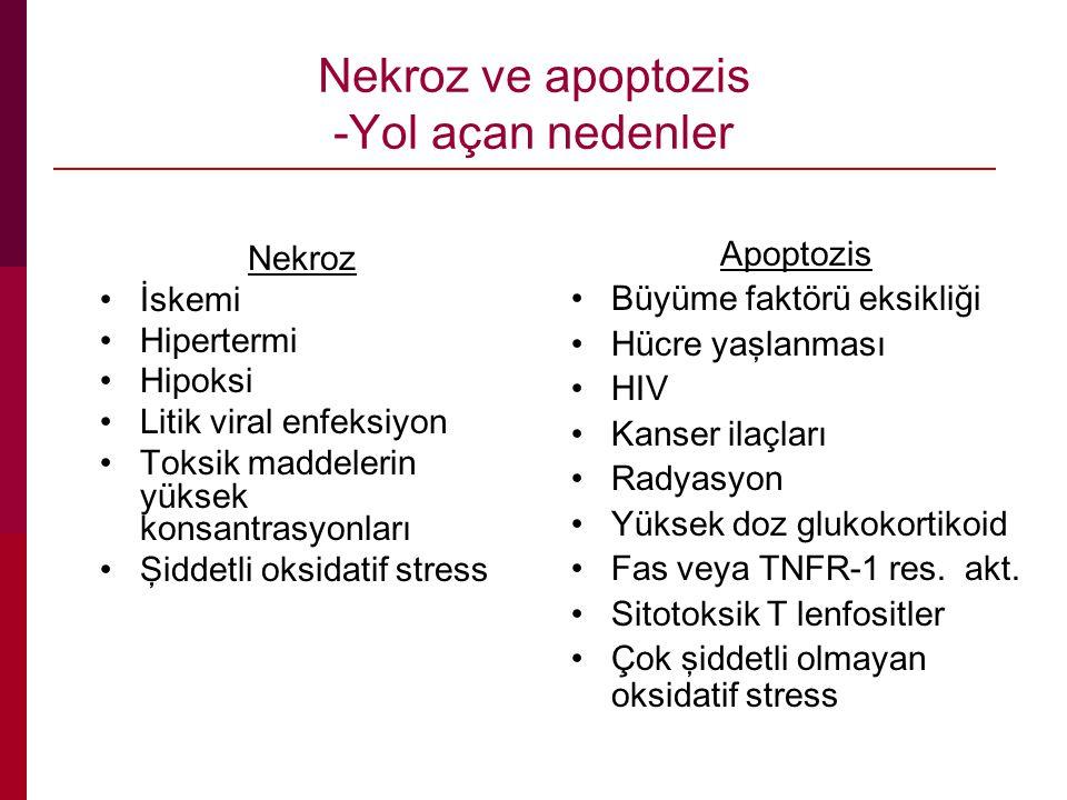 Nekroz ve apoptozis -Yol açan nedenler Nekroz İskemi Hipertermi Hipoksi Litik viral enfeksiyon Toksik maddelerin yüksek konsantrasyonları Şiddetli oksidatif stress Apoptozis Büyüme faktörü eksikliği Hücre yaşlanması HIV Kanser ilaçları Radyasyon Yüksek doz glukokortikoid Fas veya TNFR-1 res.