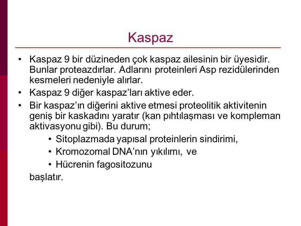 Kaspaz Kaspaz 9 bir düzineden çok kaspaz ailesinin bir üyesidir. Bunlar proteazdırlar. Adlarını proteinleri Asp rezidülerinden kesmeleri nedeniyle alı