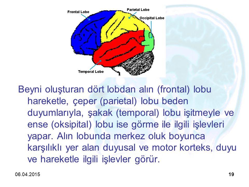 06.04.201519 Beyni oluşturan dört lobdan alın (frontal) lobu hareketle, çeper (parietal) lobu beden duyumlarıyla, şakak (temporal) lobu işitmeyle ve ense (oksipital) lobu ise görme ile ilgili işlevleri yapar.