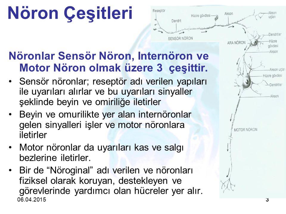 06.04.20153 Nöronlar Sensör Nöron, Internöron ve Motor Nöron olmak üzere 3 çeşittir.