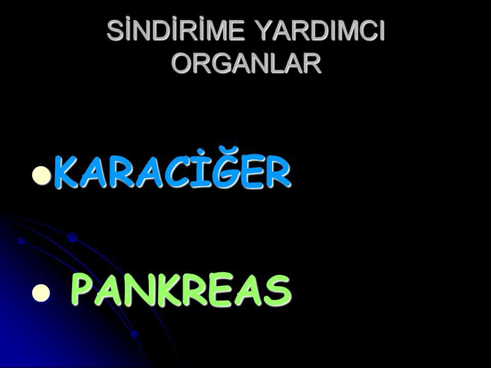 SİNDİRİME YARDIMCI ORGANLAR KARACİĞER KARACİĞER PANKREAS PANKREAS