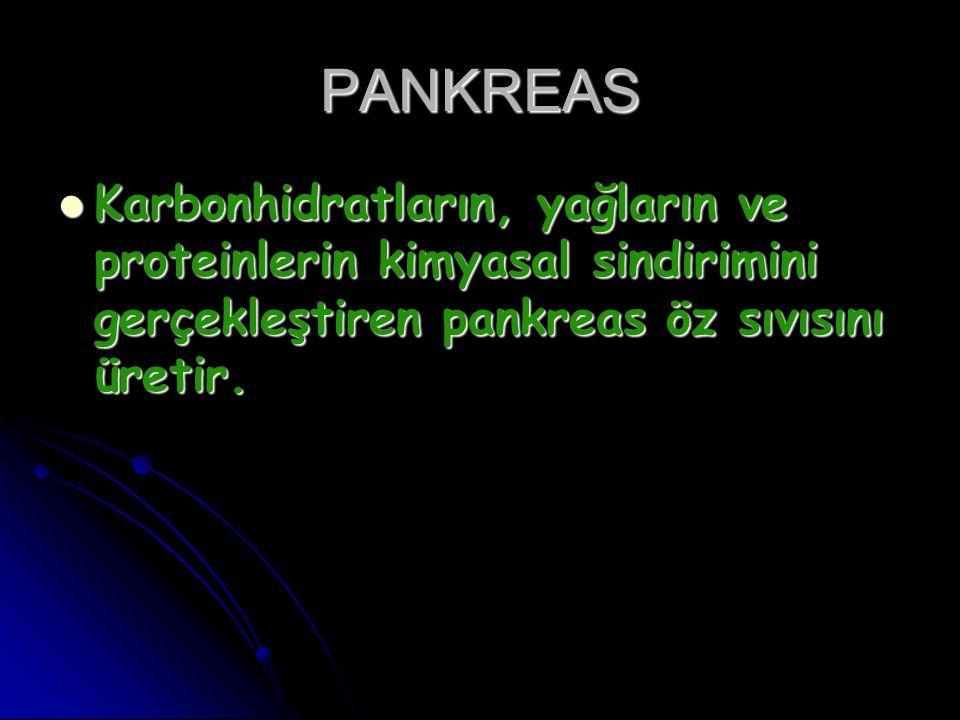 PANKREAS Karbonhidratların, yağların ve proteinlerin kimyasal sindirimini gerçekleştiren pankreas öz sıvısını üretir.