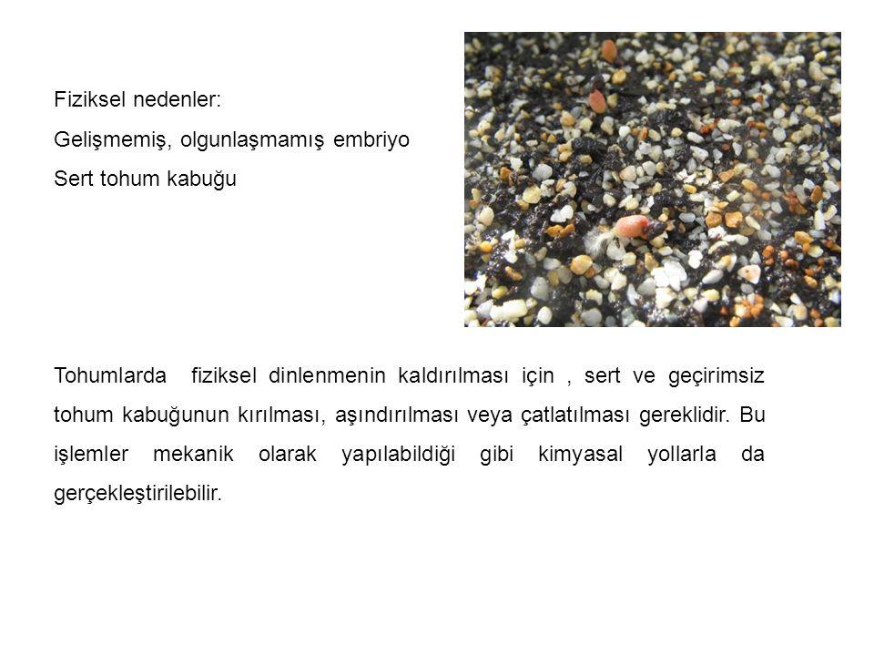 Fiziksel nedenler: Gelişmemiş, olgunlaşmamış embriyo Sert tohum kabuğu Tohumlarda fiziksel dinlenmenin kaldırılması için, sert ve geçirimsiz tohum kab