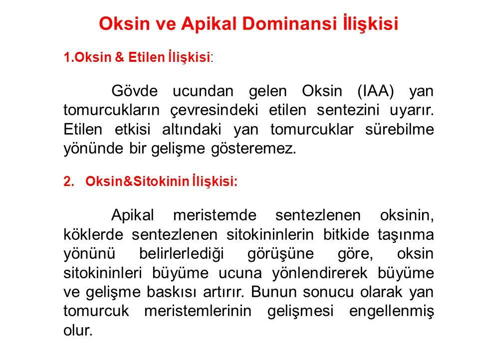 Oksin ve Apikal Dominansi İlişkisi 1.Oksin & Etilen İlişkisi: Gövde ucundan gelen Oksin (IAA) yan tomurcukların çevresindeki etilen sentezini uyarır.