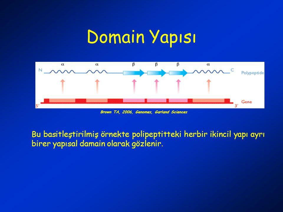 Domain Yapısı Bu basitleştirilmiş örnekte polipeptitteki herbir ikincil yapı ayrı birer yapısal damain olarak gözlenir. Brown TA, 2006, Genomes, Garla