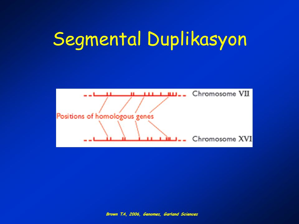 Segmental Duplikasyon Brown TA, 2006, Genomes, Garland Sciences
