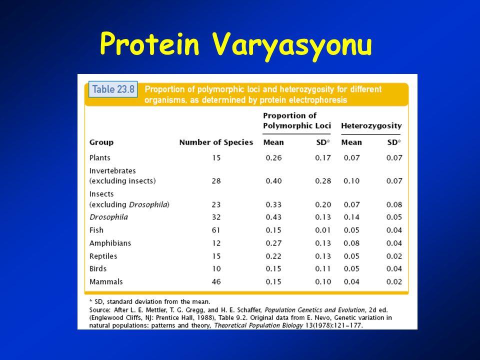 Protein Varyasyonu