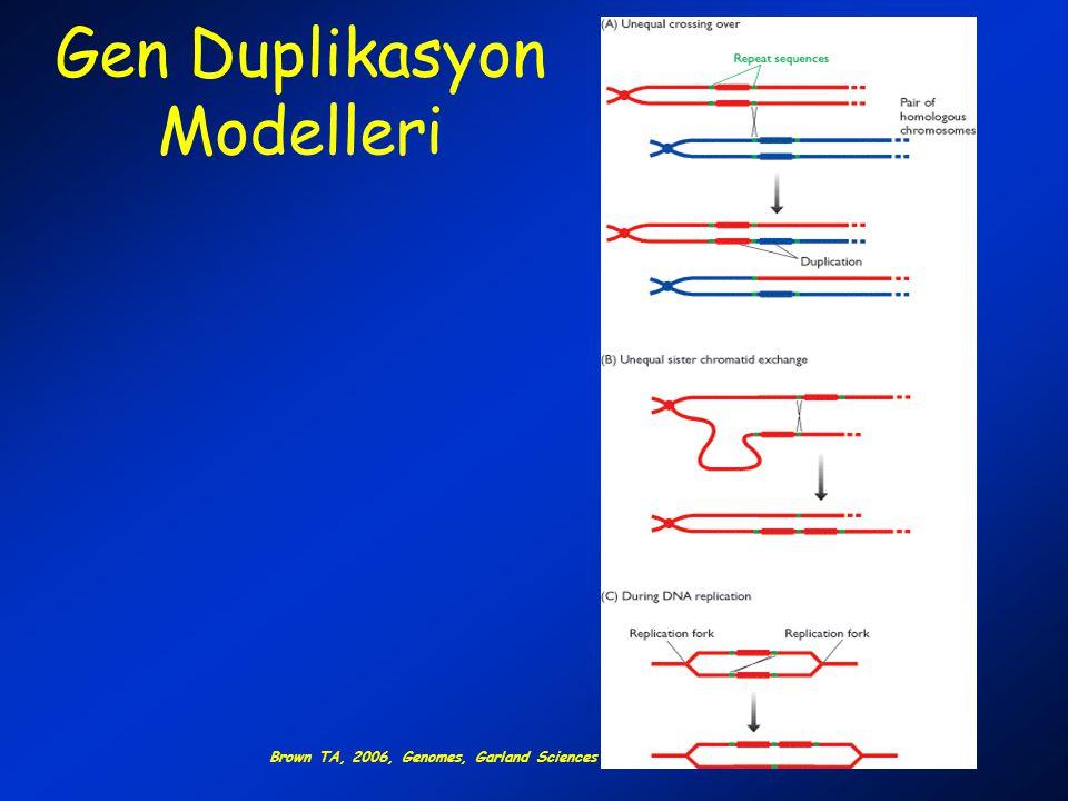 Domain Yapısı Bu basitleştirilmiş örnekte polipeptitteki herbir ikincil yapı ayrı birer yapısal damain olarak gözlenir.
