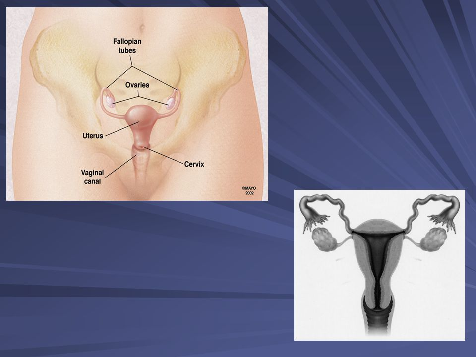Anormal Pap test saptanan hastalara ne yapılır .