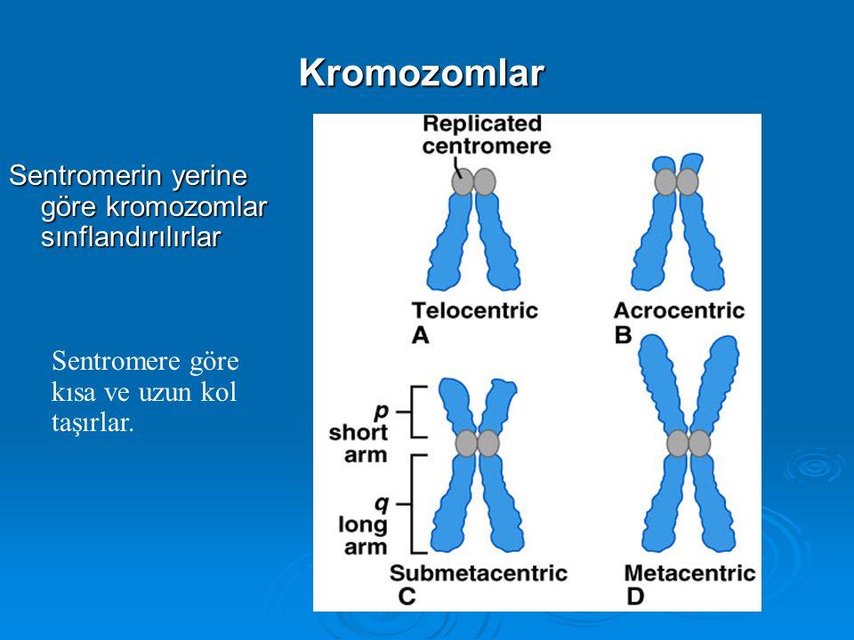Kromozomlar Kardeş kromatidler telomertelomer sentromer p kolu q kolu