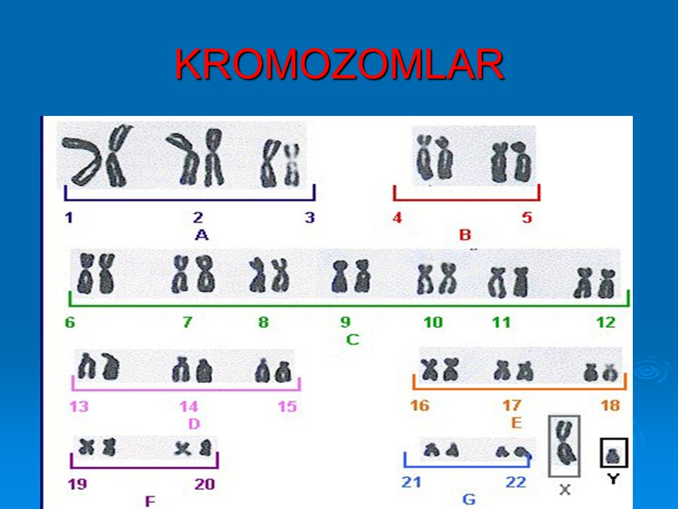 KARYOTİP - Kromozomların belirli bir düzende sıralanması (Boy, sentromer) 7 Grup A-G A grubu1,2,3met+sub B grubu4,5sub C grubu6-12sub D grubu13-15satellit-akro E grubu16-18sub F grubu19,20met G grubu21,22satellit-akro Seks X submetasentrik Y akrosentrik